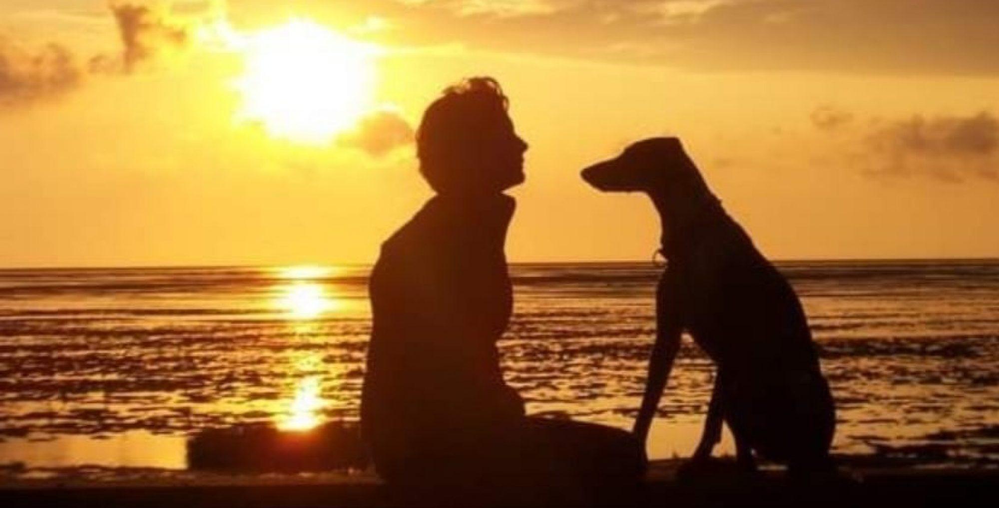 Coaching für Mensch mit Hund